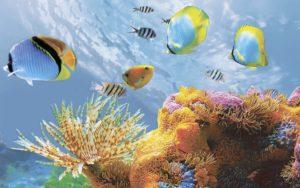Декор панно Коралл 1