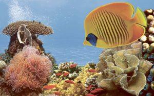 Декор панно Коралл 2