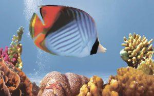 Декор панно Коралл 3