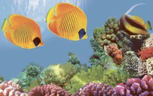 Декор панно Коралл 4