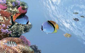 Декор панно Коралл 5