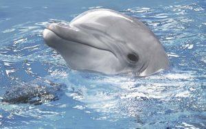Декор панно Дельфины 1