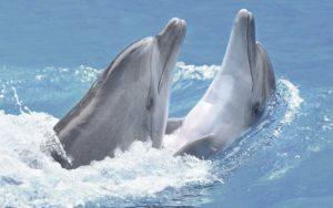 Декор панно Дельфины 2