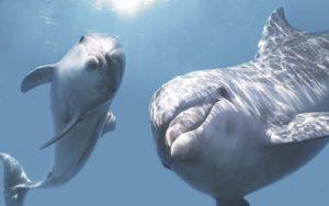 Декор панно Дельфины 3